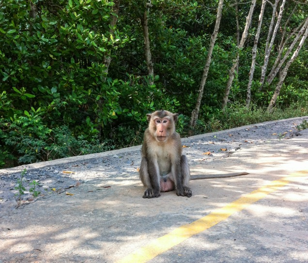 monkey in the road
